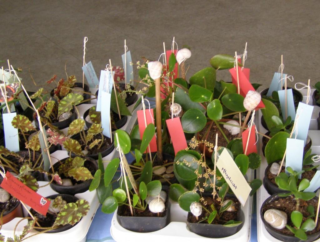 Pflanzenbörse
